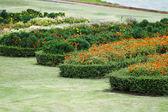 Zinnia flower in the garden — Stock Photo
