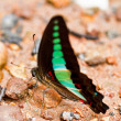 Stock Photo: Butterfly in pang sidnational park thailand