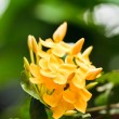 Stock Photo: Yellow flower spike