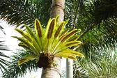 Bird nest fern — Stock Photo