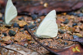 Butterfly in pang sida national park thailand — Stock Photo