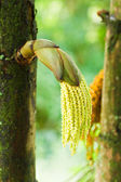Palm flower on tree — Stock Photo