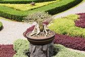 Bahçede yeşil bonsai ağacı — Stok fotoğraf