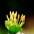 Stok fotoğraf: Yellow flower spike