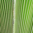 Palm leaf. — Stock Photo #36454381