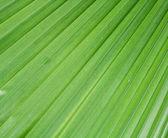 Palmový list. — Stock fotografie