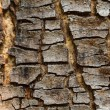 Texture of old tree rind — Stock Photo #36476107
