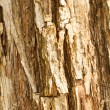 Texture of old tree rind — Stock Photo #36476179