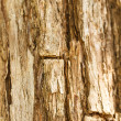 Texture of old tree rind — Stock Photo #36476227