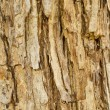 Texture of old tree rind — Stock Photo #36476303