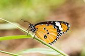 Schmetterling auf einer blume. — Stockfoto