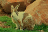 Rabbit on the lawn. — Stock Photo