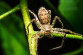 Pavouk na zelený list — Stock fotografie