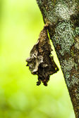 Butterfly cocoons — Stock Photo