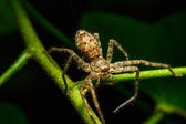 Spider on green leaf — Stock Photo