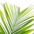 Royalty-Free Stock Photo: Beautiful palm leaf