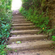 Staircase in deep forest - Stock Photo