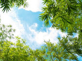 Fresh bamboo leaves border — Stock Photo