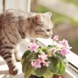 Royalty-Free Stock Photo: Cat and flowers