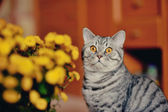 Cat and flowers — Stock Photo