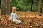 Leaves fall — Stock Photo