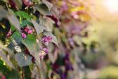 Sunny autumn rays — Stock Photo