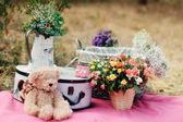 Children's toy bear — Stock fotografie