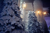 Tree at night in the snow — Stock Photo