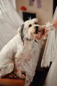 Věrný pes — Stock fotografie