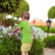 Boy and flowers — Stock Photo #19360405