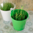 Grass in pots — Stock Photo