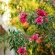 Flowering bush - Stock Photo