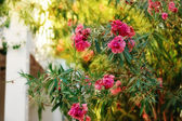 Flowering bush — Stock Photo