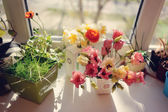 Blumen auf der fensterbank — Stockfoto