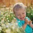 Daisies and baby — Stock Photo
