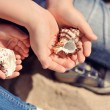 Stock Photo: Beautiful seashells
