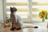 猫和花 — 图库照片