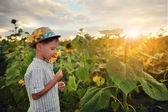 Child in sunflowers — Stock Photo