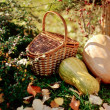 Basket and pumpkin — Stock Photo