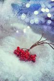 Viburnum in the snow — Stock Photo