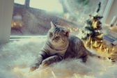 Cat in the winter window — Stock Photo