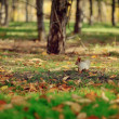Squirrels in the park — Stock Photo