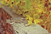 Feuille d'automne jaune — Photo