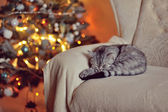 Cat and Christmas trees — Stock Photo