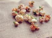 Rosebuds — Stock Photo