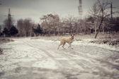Dog winter — 图库照片