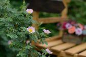 Brier bush — Stock Photo