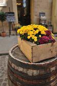Flowers in pots — Stock Photo