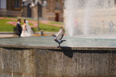 Pigeon and a fountain — Stock Photo