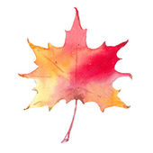 Colorful autumn leaf isolated on white background. — Stock Photo
